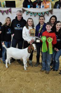 2109_Grand_Champion_Goat 2